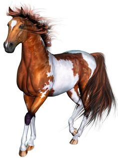 paarden-shutterstock-pinto.