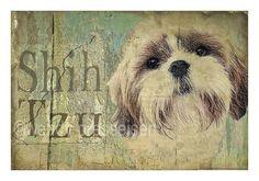 Vintage Look SHIHTZU DOG PRINT Shabby Chic Cottage Shih Tzu Poster Cute -Signed Wendy Presseisen. $18.00, via Etsy.