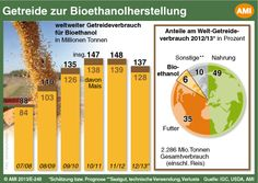 How much #grain is used globally to produce #bioethanol? #infografic #energy #agriculture