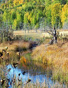 Autumn in the Bog, Michigan's Upper Peninsula