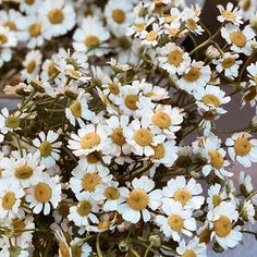don't you think daisies are the friendliest flower? — kathleen kelly