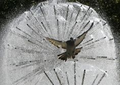 A pigeon flies in front a fountain during a sunny day in central Donetsk, Ukraine. (Reuters)