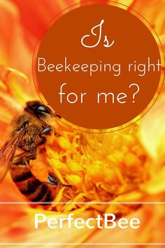 Learn all about beekeeping, including if it's possible with your busy lifestyle!
