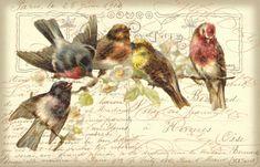 Francés los pájaros Collage cinco pájaros sobre una rama