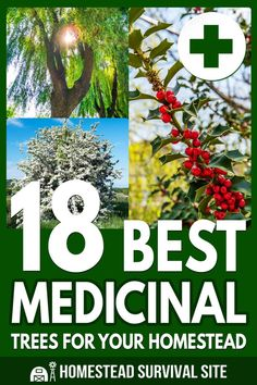 If you are looking into growing your own medicine, you'll want to consider adding some of these medicinal trees to your homestead. Survival Life Hacks, Survival Skills, Avocado Tree, Herbal Magic, Natural Medicine, Herbal Medicine, Homestead Survival, Medicinal Plants, Garden Inspiration