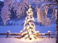 Glowing Christmas Tree in Winter -b - Art Print Poster,Wall Decor,Home *** To view further for this item, visit the image link. (This is an affiliate link) Winter Szenen, Winter Magic, Winter Christmas, Merry Christmas, Winter Light, Christmas Countdown, Autumn Fall, Outdoor Christmas, Winter Time