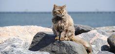 Katten zijn gewend aan warmte, maar hoe kun je oververhitting bij een kat herkennen? Plus veel tips om je kat door de warme zomerdagen heen te helpen.