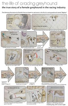 Based on real events in the life of a racing greyhound named Bagface, see the illustrations by Danielle Festa. Before being sent to the facility you will see she had a bleak existence of confinement, falling ill, becoming injured and being transported frequently.