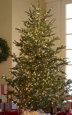 Fresh Unsheared Blue Ridge Mountain Christmas Trees for sale!