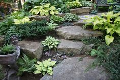 Natural stone steps, pretty shade plants
