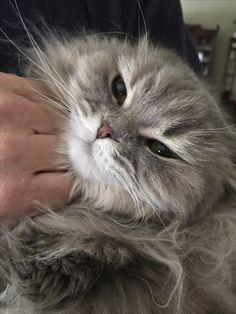 Beautiful little kitty nose.