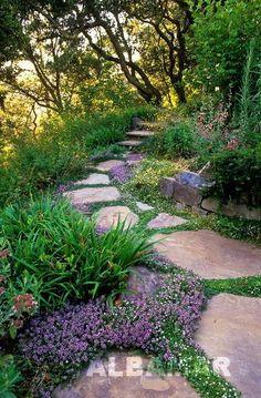 Macierzanka piaskowa - 'Coccineus' Thymus serphyllum – idealne rośliny tworzace nizutkie dywany. Doskonale prezentują się między skałami oraz przy ścieżkach.
