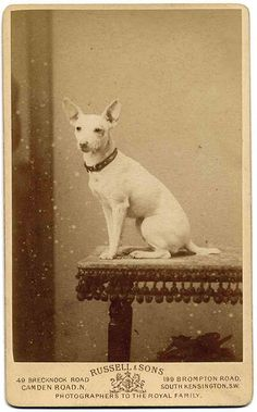 By appointment by Libby Hall Dog Photo, via Flickr