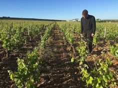 Observation des vignes Clos de Vougeot pré-spectacle... #voyage #france #vignoble