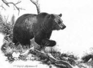 Pencil drawing of a grizzly bear in the mountains
