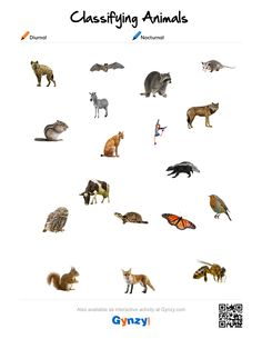 Teaching with help of the interactive whiteboard in a simple and effective way Interactive Whiteboard, Interactive Activities, Classifying Animals, Astronomy, Keys, Pdf, Movie Posters, Animal Classification, Film Poster