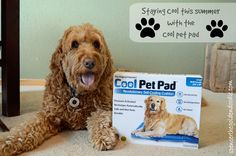 What if I told you there is a product that will help keep your dog cool that requires NO electricity, No refrigeration, and No water! The Green Pet Shop offers that product, it's called Cool Pet Pad. Click on the image to learn more!
