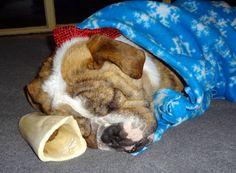<3 Cuddled up Lola Mae <3