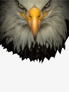 Photo eagle eye insight, Eagle Eye Observation, Insight, Color Eye Insight PNG Image