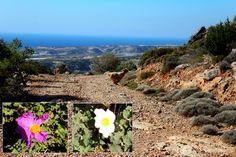 https://flic.kr/s/aHskwAcYVj   150 Land of the Levitating Goat   Beetles, birds, flowers and... slug penises. More novelties of nature as we continue our trek among the Forty Saints in this week's #CreteNature bit.ly/40saintsII