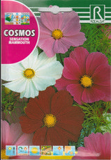 Pillangóvirág Cosmos, Plants, Plant, Space, Planets, Outer Space