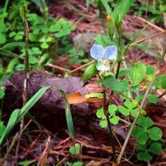 【g_gneco】さんのInstagramの写真をピンしています。《#flower  #plants #fogetmenot #green #忘れな草 #植物 #森 #林 … … 色の薄いのを初めて見た。》