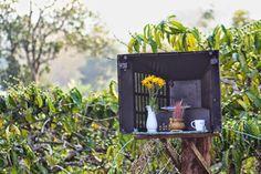 Cambodge Mag   : Album photo, images de campagne