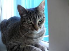 Zippora  Cat | Pawshake Wellington