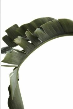 curve and line Tropical Leaves, Tropical Plants, Green Leaves, Plant Leaves, Cactus Plante, Plants Are Friends, Green Plants, Go Green, Botany