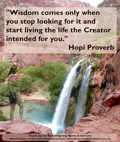 #Indian #quote #Hopi Proverb                                                                                                                                                                                 More