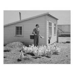 Shop Farm Girl Feeding Chickens, Vintage Photo Poster created by HistoryPhoto. Beyond The Horizon, Gifts For Farmers, Farm Photo, Chicken Feed, Vintage Farm, Hobby Farms, Old Farm, Farm Yard, Baby Boy Nurseries
