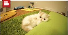 Kitten Bun Bun's Funny Reactions To Camera <3  Watch here: http://meowaum.com/1496-kitten-bun-buns-funny-reactions-to-camera/