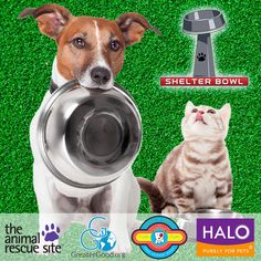 In honor of Super Bowl LI, we are celebrating our second annual Shelter Bowl. Help GreaterGood meet our goal to raise $20,000 to ship nutritious pet food to shelter animals all across the United States—that's over 400,000 meals for homeless pets!