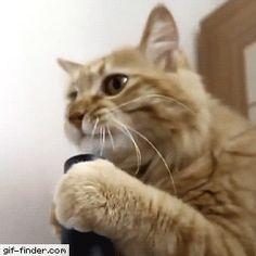 Cat vs Vacuum Cleaner Suction