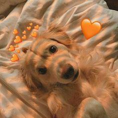 dog wallpaper for walls . Cute Little Animals, Cute Funny Animals, Cute Cats, Funny Dogs, Fluffy Animals, Animals And Pets, Cute Dog Wallpaper, Dog Wallpaper Iphone, Animal Wallpaper