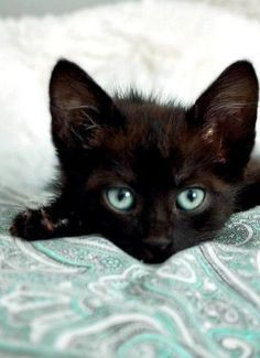 pawsforpets:  black kitten (via Pinterest)