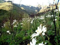 lady grey south africa - Google Search Lady Grey, African Beauty, South Africa, Landscapes, Southern, Google Search, Places, Travel, Life