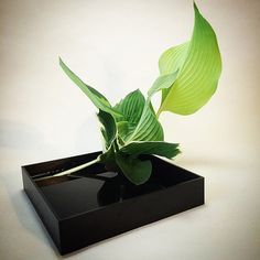 Ikebana using only leaves                                                                                                                                                     Mais