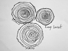 Drawing tree rings - observational. Plus they get to keep the rings
