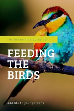 Do you have what it takes to feed the birds? Contrary to popular belief, it's not for everyone. If you've got what it takes, birds can bring lots of life into your gardens! #birds #birdfeeding #birdseed #bird watching #gardening #gardens #tropicalgardens