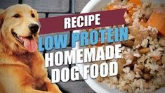 Low Protein Homemade Dog Food Recipe Top Dog Tips - Low Protein Homemade Dog Food Diets Are Often Recommended For Dogs With Kidney Failure Or Renal Disease And Ive Done A Recipe On The Best Homemade Dog Food For Kidney Problems Here If Thatx Best Dog Food, Best Homemade Dog Food, Dry Dog Food, Kidney Recipes, Dog Food Recipes, Dog Kidney Disease Diet, Kidney Failure, Renal Dog Food, Low Protein Dog Food