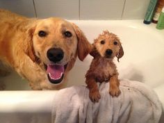 Bath time!|| pinterest || paigelikes