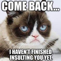 The 30 most iconic Grumpy Cat memes - Katzenrassen Beautiful Cats Grumpy Cat Quotes, Funny Grumpy Cat Memes, Cute Cat Memes, Funny Animal Jokes, Cute Funny Animals, Funny Animal Pictures, Cute Cats, Funny Cats, Funny Memes