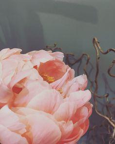 Quelques Photos, Boutique, Rose, Plants, Painting, Art, Flowers, Art Background, Pink