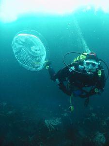 Scuba Diving Ireland - Balliinskelligs