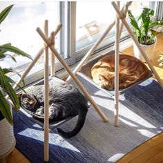 Adventure Tent for cats. Stylish cat bed for discerning home owners. Adventure Tent for cats. Stylish cat bed for discerning home owners. Cat Playground, Pet Furniture, Furniture Design, Barbie Furniture, Garden Furniture, Modern Furniture, Futuristic Furniture, Plywood Furniture, Cat Room