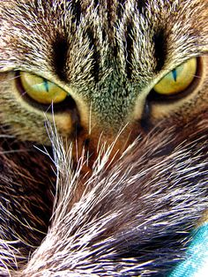 look into my eyes ...