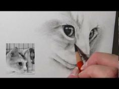 Drawing Cats :3/4 Calico Face- Full Version