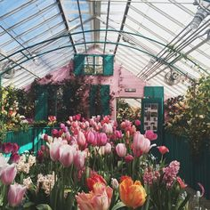 Adelaide)) How about a trip to the greenhouse? I've been hoping to get some flowers did my room, so it'd kill two birds with one stone.