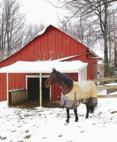 To Blanket Your Horse?or Not? | Expert advice on horse care and horse riding